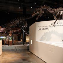 Houston Museum Natural Science Membership