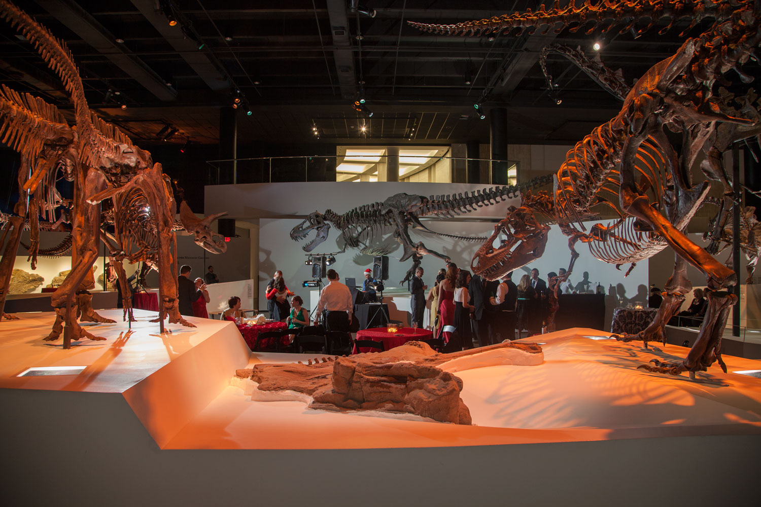 Houston Museum Of Natural Science Capacity