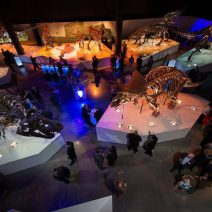 A venue rental experience in the beautiful Paleo hall. From wedding venues, corporate events, or team building, The Houston Museum of Natural Science provides a unique experience for your guests.