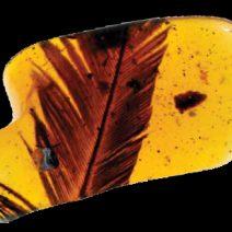amber secrets 1