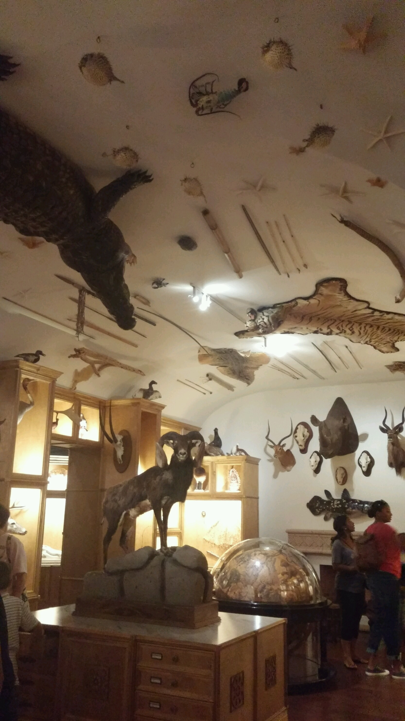 Cabinet of Curiosities | Houston Museum Of Natural Science