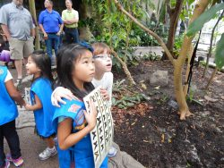 Daisy Girl Scouts in the Cockrell Butterfly Center as part of the museum program.