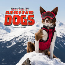 A promotional picture from Superpower Dogs, A film chronically the heroic journeys of rescue dogs by Daneil Ferguson.