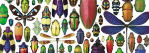 Collection of various insects organized by Chris Marley for his exhibition Biophilia.