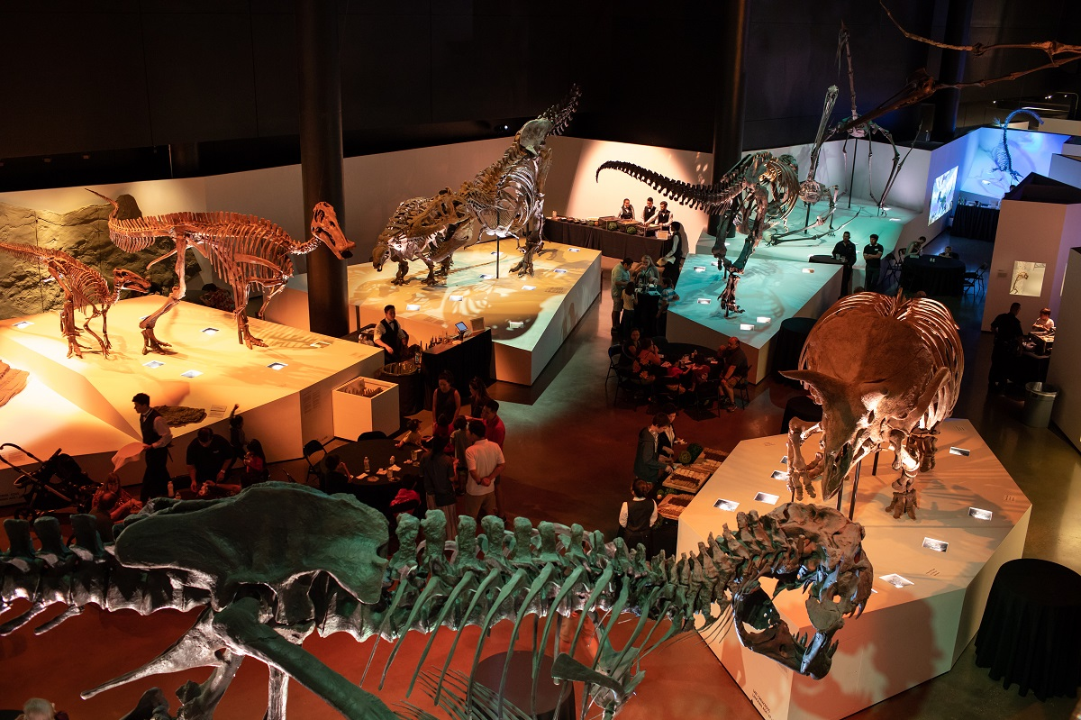 Image shows a corporate event in the paleontology hall of the houston museum of natural science