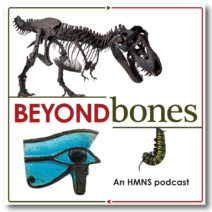 "The words ""Beyond Bones an HMNS Podcast"" are written in red and black and are surrounded by images of an artifact from ancient egypt, a t. rex skeleton and a monarch butterfly caterpillar."