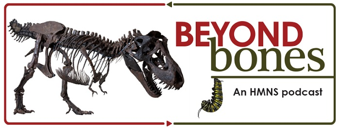 "Image shows the words ""Beyond Bones an HMNS Podcast"" in red and black, surrounded by a t. rex skeleton and monarch butterfly caterpillar."
