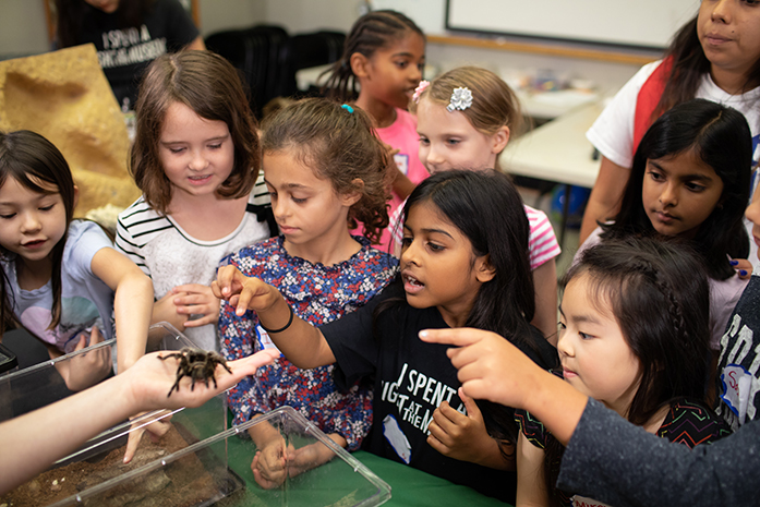 A small group of children at a HMNS Youth Education event observing an arachnid (tarantula)