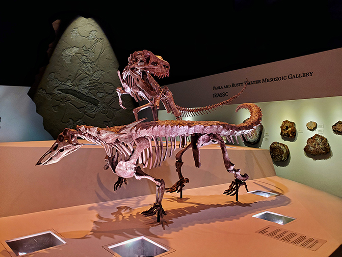 A fossil display in the Triassic area of the Morian Hall of Paleontology at HMNS.