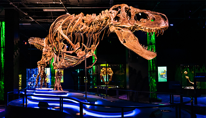 An exhibition displaying Victoria the Tyrannosaurus Rex, one of the largest and most complete T-rex specimens to date.
