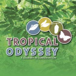 Tropical Odyssey